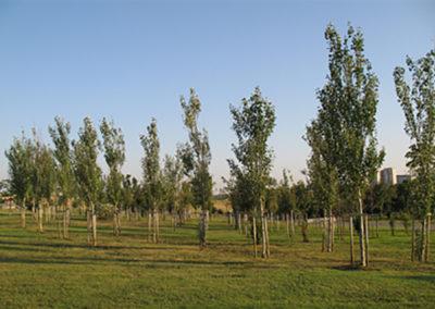 PARCO DELLE SABINE urban park in the Municipality of Bufalotta