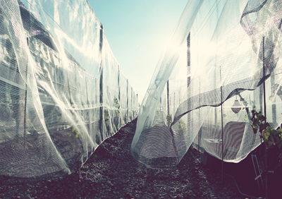 VIGNA VELATA temporary garden in Cascina Langa